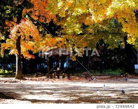 秋の高知公園'20(自由の広場の紅葉した木々) 72989642