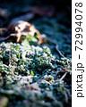 初冬の朝に降りた初霜 72994078