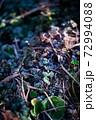 初冬の朝に降りた初霜 72994088