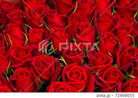 一面の赤いバラ 薔薇 背景素材 花 複数 たくさん スタジオ撮影 バックグラウンドの写真素材