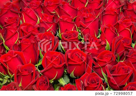 一面の赤いバラ 薔薇 背景素材の写真素材