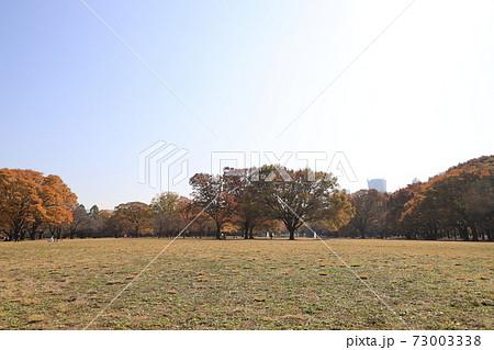 秋の東京都渋谷区代々木公園広場の風景 73003338