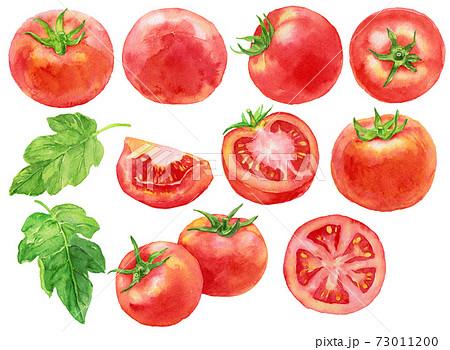水彩トマト素材 73011200