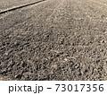 冬の田んぼ 73017356