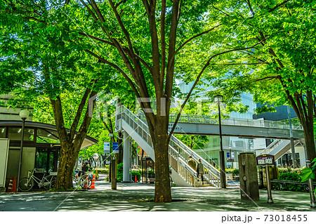 東京都渋谷区・表参道(原宿署、神宮前交番前広場) 73018455