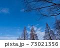 並木の空 73021356