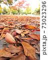 枯れ葉散る秋の公園風景 73023296