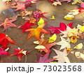 雨上りの秋の公園の水たまりに散ったモミジバフウの枯れ葉 73023568