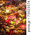 雨上りの秋の公園の水たまりに散ったモミジバフウの枯れ葉 73023574