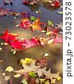 雨上りの秋の公園の水たまりに散ったモミジバフウの枯れ葉 73023578