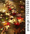 雨上りの秋の公園の水たまりに散ったモミジバフウの枯れ葉 73023580
