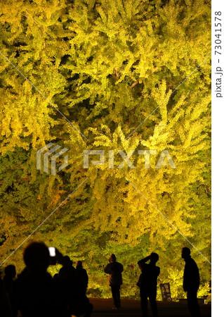 青森県にある国の天然記念物の大イチョウ 73041578