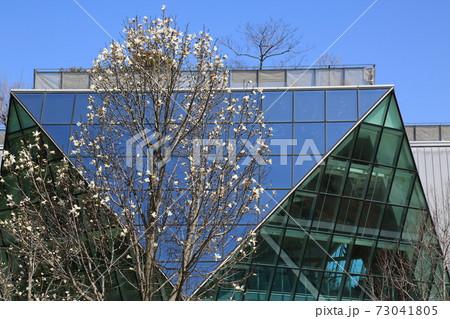 春のフラワーパーク江南・52(愛知県江南市:木曽三川公園フラワーパーク江南) 73041805