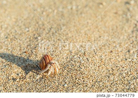 カタツムリの殻を背負うオカヤドカリ 73044779