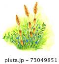 手描き水彩 つくしのある春の風景 73049851