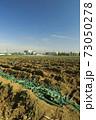 収獲の終わった郊外の冬のネギ畑風景 73050278