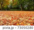 秋の欅の枯れ葉散る公園風景 73050280