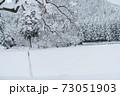 雪が積もった柿の木と風景 73051903
