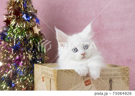 箱に入った白い仔猫とクリスマスツリー 73064926