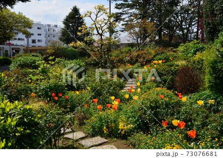 港の見える丘公園の花畑(横浜市中区) 73076681
