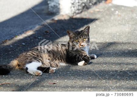 世間のコロナ禍とは無縁の猫界と思うなかれ 優しいエサやりの人数減少 73080695