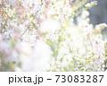 光あふれる桜 73083287