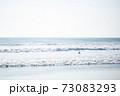 波打ち際を飛ぶ1羽のカモメ、青空 73083293