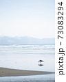 水辺を歩く1羽のカモメ、青空 73083294