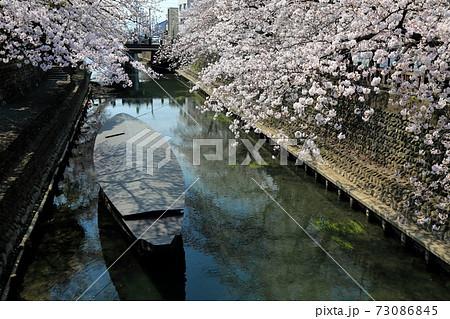 春の水門川・55(岐阜県大垣市) 73086845