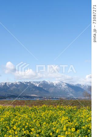 積雪の比良山系と早咲きの黄色い菜の花 73087271