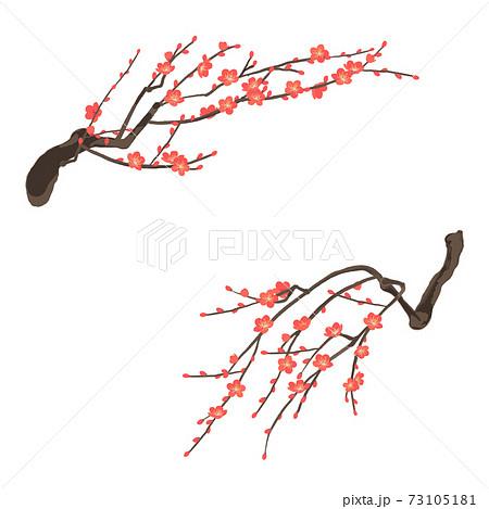 紅梅 梅の花のベクターイラスト 73105181