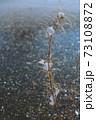 雪の花を咲かせる枯れた草花 73108872