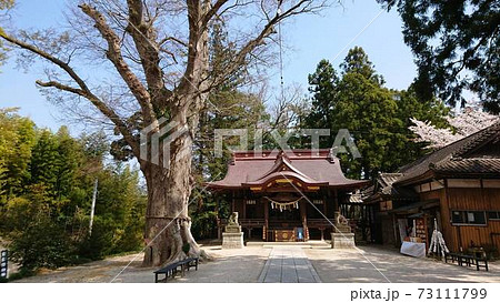 茨城県・小美玉市「素鵞神社(そがじんじゃ)」~御神木と拝殿 73111799