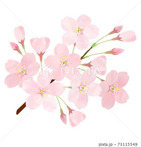 桜 さくら サクラ 桜の枝 ソメイヨシノ 73115549