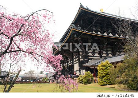【奈良】春の東大寺 廻廊から見る東大寺大仏殿としだれ桜 73123249