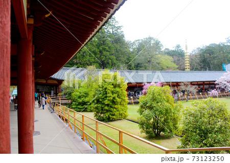 【奈良】春の東大寺 雨の中の廻廊と桜 73123250
