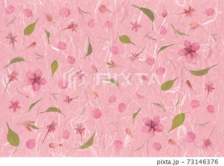 春のイメージ押し花、河津桜さくら色和紙アート 73146376