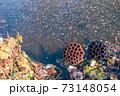 凍てついた池に落ちた蓮の花托 73148054