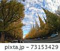 神宮銀杏並木 秋の風景 73153429