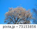 春の青空に咲くヤマザクラの木 岡山県小田郡矢掛町 73153856