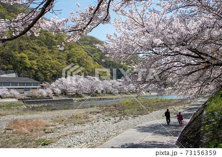 岡山県の桜の名所 いばらづつみ・井原堤の桜並木は圧巻 73156359