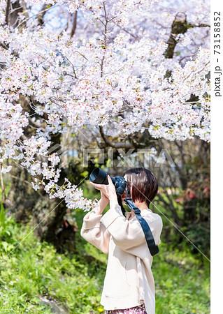 京都観光で桜の写真を撮る若いカメラ女子 73158852