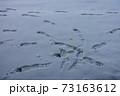 雪の足跡 73163612