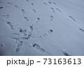 雪の足跡 73163613