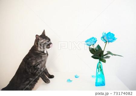 クロサビ柄の猫と花瓶に生けられた2輪の青いバラ 73174082