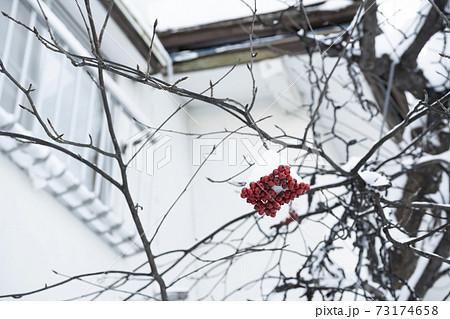 ピラカンサスの木に赤い実がついたまま雪がつもってる風景 73174658