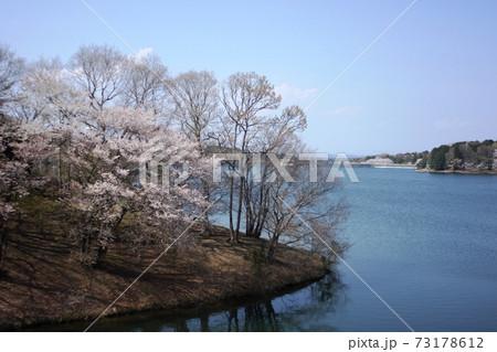 青空を背景にダム湖と桜 楮川ダム 73178612