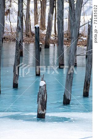 氷が溶け始めた春の青い池 美瑛町 73185022