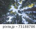 杉林を見上げた風景 73188786