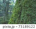 苔に覆われた杉の表面 73189122